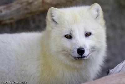 20070601-Denver Zoo-020