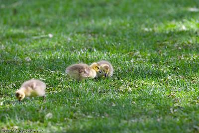 20070601-Denver Zoo-027