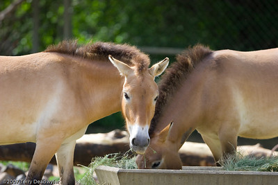 20070601-Denver Zoo-036