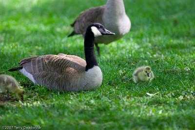 20070601-Denver Zoo-026