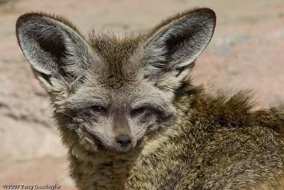 20070601-Denver Zoo-031