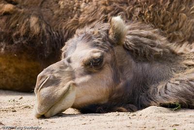 20070601-Denver Zoo-038