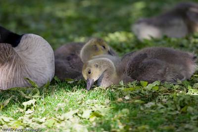 20070601-Denver Zoo-022