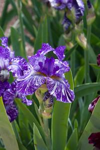 080525 Denver Botanic Gardens_035