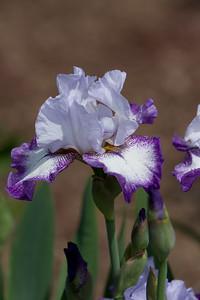 080525 Denver Botanic Gardens_029