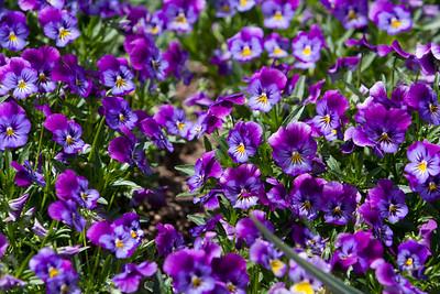 080525 Denver Botanic Gardens_009