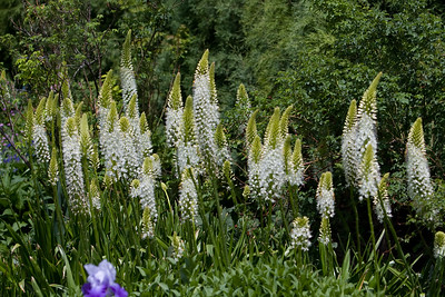 080525 Denver Botanic Gardens_004