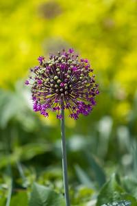 080525 Denver Botanic Gardens_008
