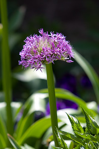 080525 Denver Botanic Gardens_015