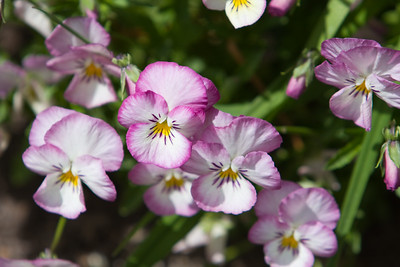 080525 Denver Botanic Gardens_001