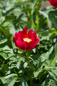 080525 Denver Botanic Gardens_014
