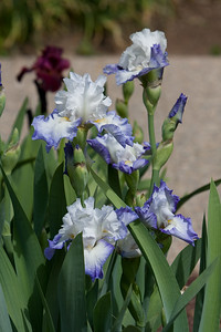 080525 Denver Botanic Gardens_032