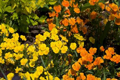 080525 Denver Botanic Gardens_017