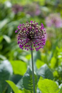080525 Denver Botanic Gardens_005