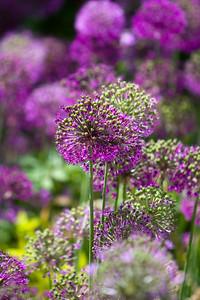 080525 Denver Botanic Gardens_007