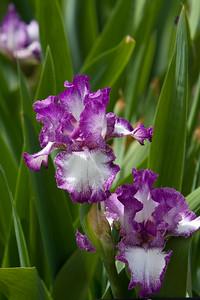 080525 Denver Botanic Gardens_031
