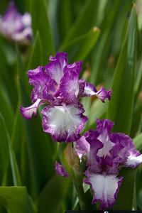 080525 Denver Botanic Gardens_030