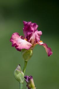 080525 Denver Botanic Gardens_040