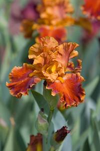 080525 Denver Botanic Gardens_028