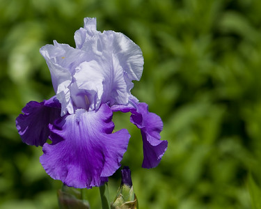 080525 Denver Botanic Gardens_002