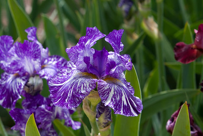 080525 Denver Botanic Gardens_034