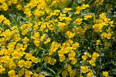 080525 Denver Botanic Gardens_011
