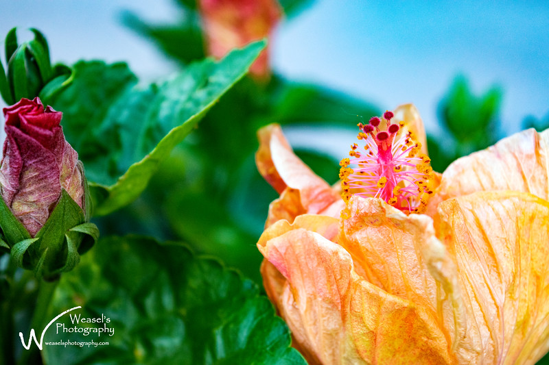 Frisco Flowers - 7June2016