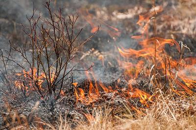 Mid-Atlantic Wildfire Training Academy_photos by Gabe DeWitt_June 07, 2014-93-2
