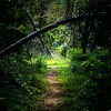 Nature trails-1