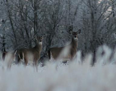 2014_deer