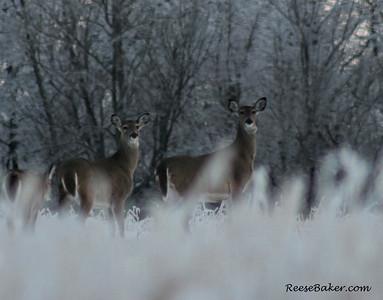 2014_deer-3067182319-O
