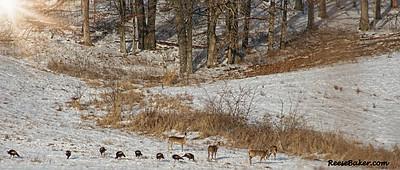 deer1-3074299303-O