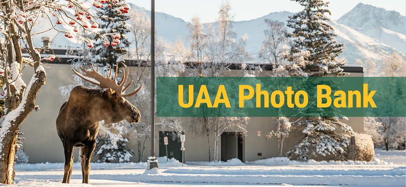 UAA photo bank logo in green and gold over image of moose in UAA PSB parking lot.