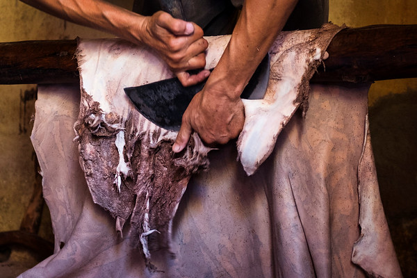 A worker trims hides at the Chouara tannery in the Medina in Fes, Morocco.