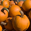 Record-Eagle/Douglas Tesner<br /> <br /> Harvested pumpkins wait to be cleaned and priced on the Old Mission Peninsula farm of Bill and Monica Hoffman.