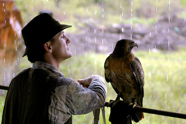 Professional falconer Laine MacTague and Manuka, the falconer's 3-year old female redtail hawk, wait out a sudden rain shower. The two spent an afternoon hunting rabbits, between showers, along the Santa Clara River in Santa Paula, Calif.