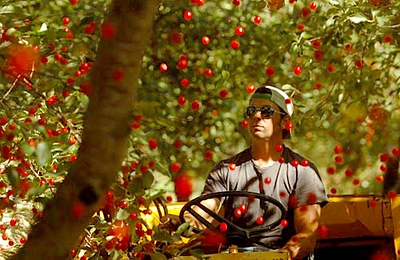 Record-Eagle/Tyler Sipe<br /> Anthony Gallagher shakes a tart cherry tree in late July. Cherries, cattle and dairy account for a large part of the Gallaghers' business.