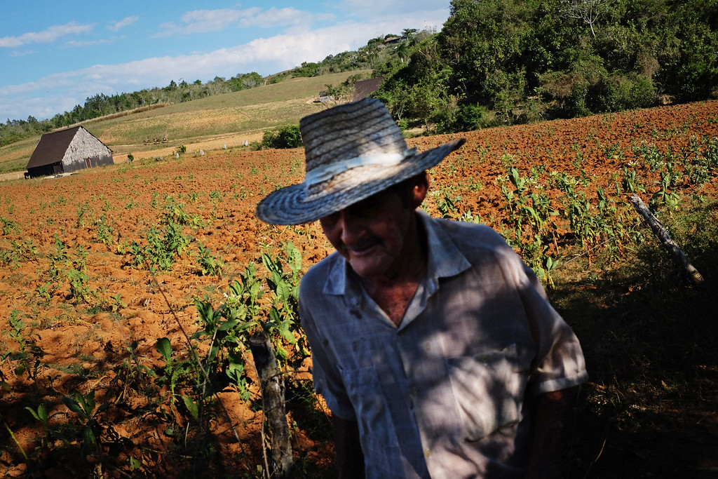A farmer walks the paths between fields in Viñales, Cuba.