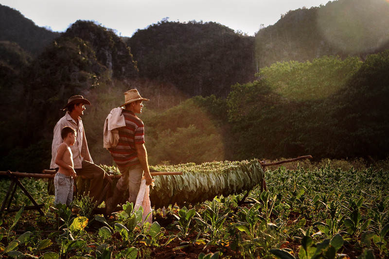 A family of tobacco farmers watch the sunset from their tobacco fields, which have been in the family for many generations, in Viñales, Cuba.