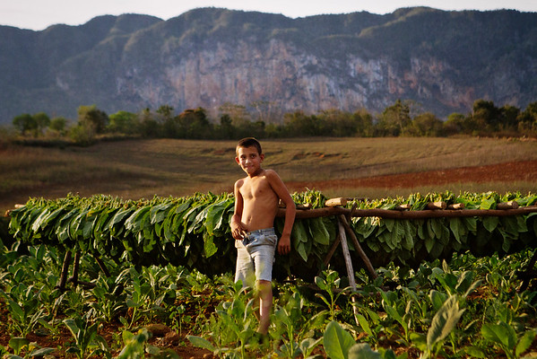A young boy poses on his family's farm with tobacco leaves that have been picked and laid out to dry in Viñales, Cuba.