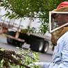 Record-Eagle/Douglas Tesner<br /> Beekeeper Mike Street checks a cluster of bees to see if the queen bee is still in it. He removed two clusters from a tree in front of the Stromberg-Carlson engineering office.