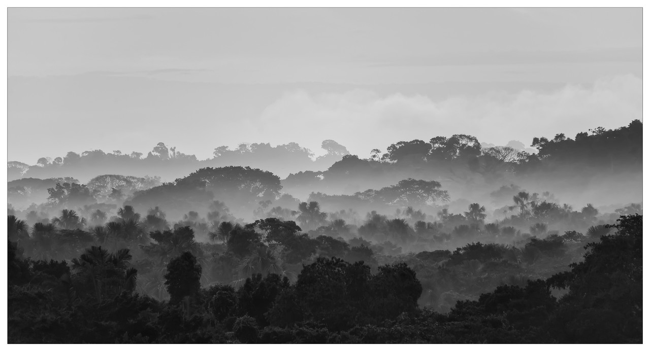 Black and white photo showing the Ecuadorian Rainforest.