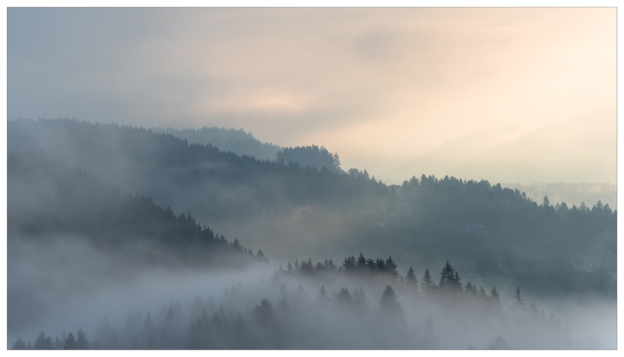 Morning mist amoungst the trees in the Black Forest, Germany.