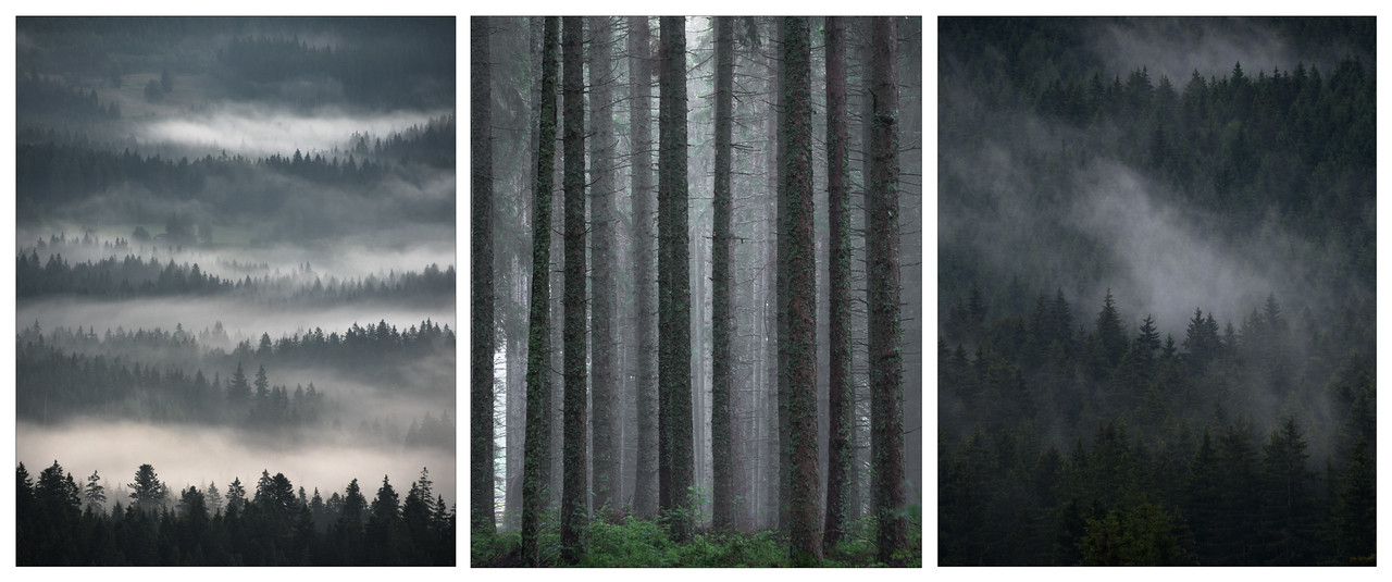 A triptych of forest scenes in the Black Forest, Germany.