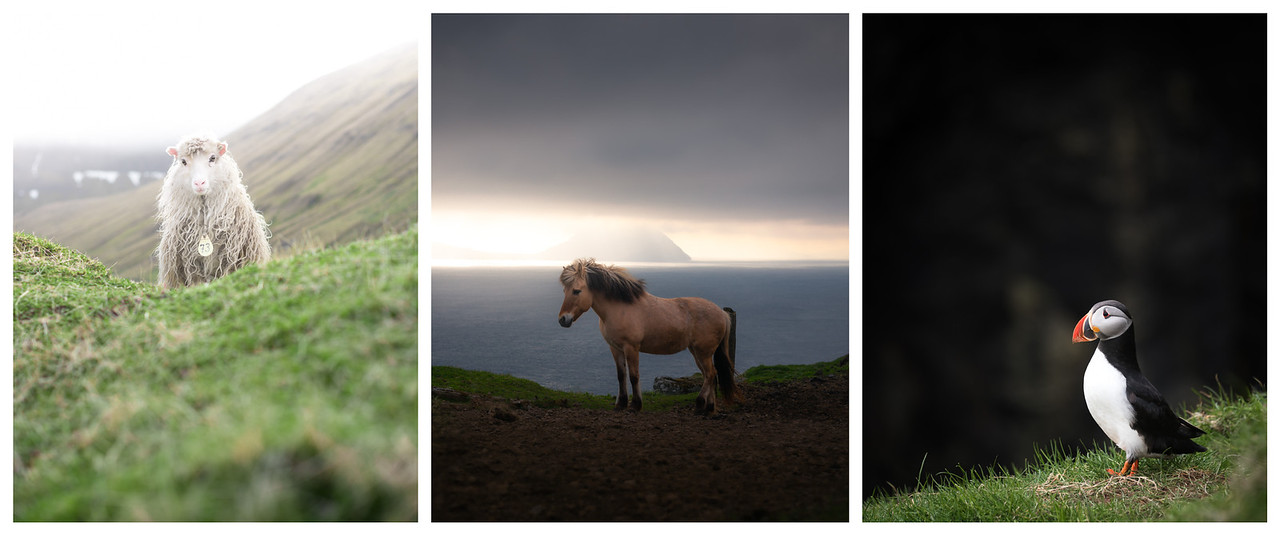 Tryptich of Faroese animals: sheep, horse, puffin.