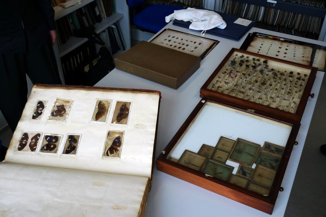 Historical insect collections