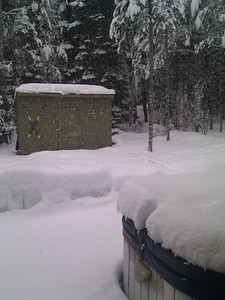 snowing in our backyard in tahoe.