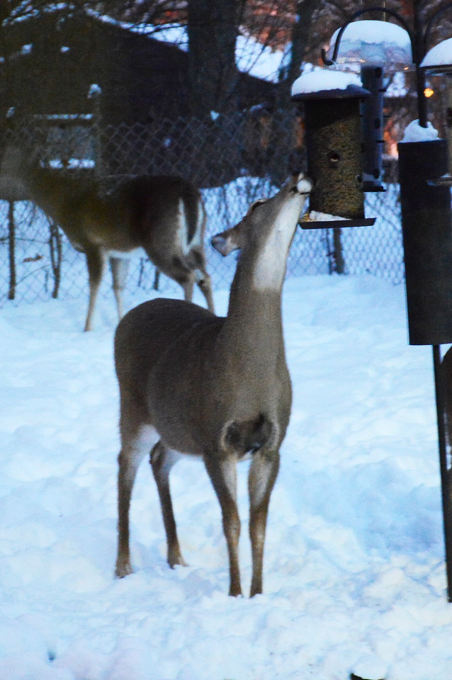 Deer-o-Mat