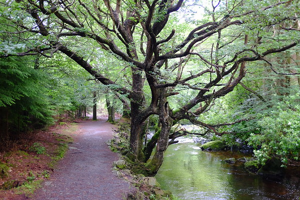 Trail, Tollymore Forest Park, County Down, Northern Ireland