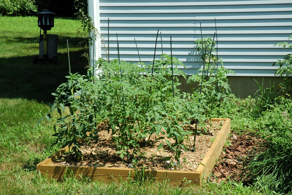 Our tomato bed